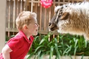 Welcome to Kindifarm   Mobile Animal Farm Sydney ...