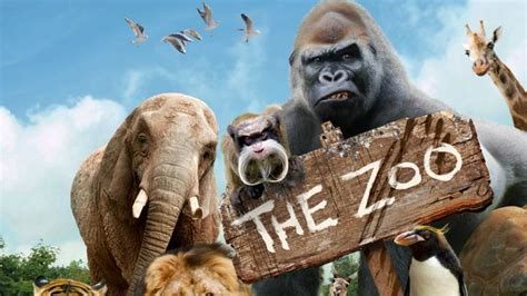 Welcome to The Zoo   CBBC   BBC