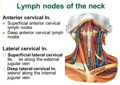 Wellness Lab Health Info: Lymph Nodes in Neck