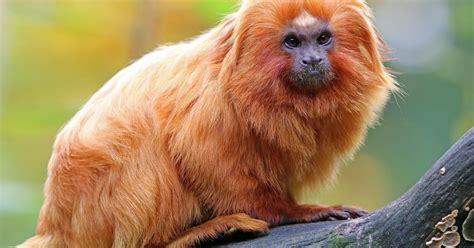 What Animals Live In The Amazon Rainforest?   WorldAtlas.com