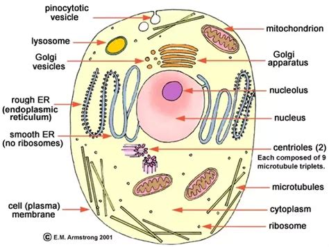 What are some examples of prokaryotic and eukaryotic cells ...