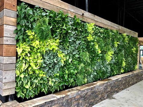 What Are the Good Plants for Green Walls