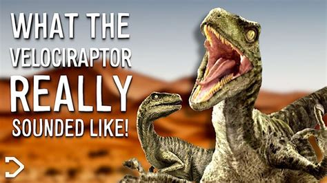 What Did The Velociraptor REALLY Sound Like?   YouTube