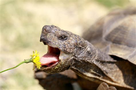 What Foods Do Reptiles Eat?