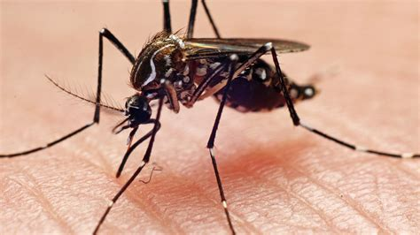 What Is EEE? Michigan Man Contracts Deadly Mosquito Borne ...