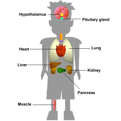 What is Homeostasis? | S cool, the revision website
