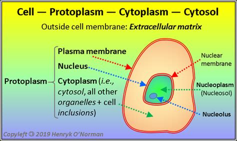 What is the difference between cytoplasm, cytosol and ...