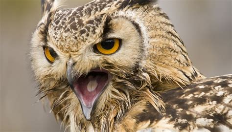 What Kind of Sound Does an Owl Make at Night? | Sciencing