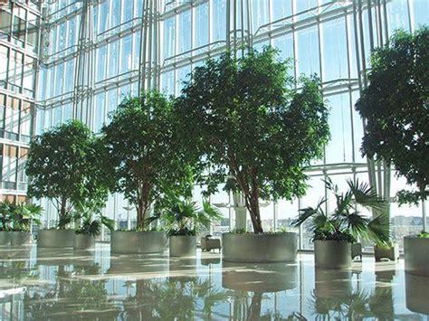What plants contribute to interior design | Plants ...