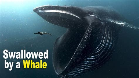 What to Do If You Are Swallowed by a Giant Whale?   YouTube