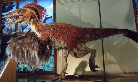 What would a feathered Velociraptor look like? – Flying ...