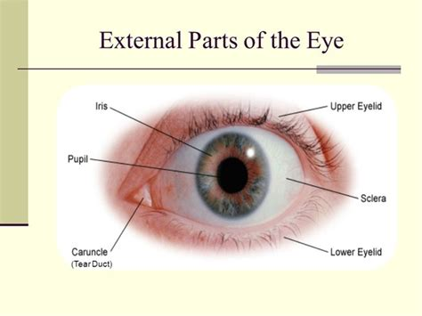When you look someone in the eyes, what do you see?   Quora