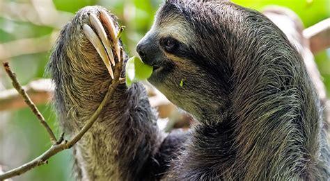 Where Can I Spot the Amazon Animals? | Amazon Cruises
