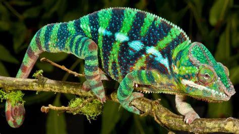 Where Do Reptiles Live?   Reference.com