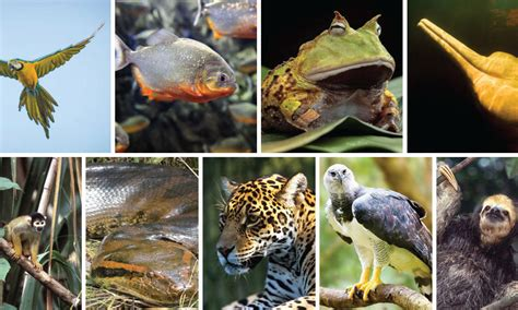 Which Amazon animal athlete do you relate to most? | Pages ...