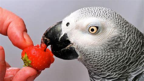 Which Birds Talk the Best? | Pet Bird   YouTube