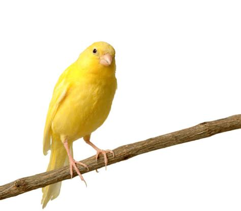 Which Species Make the Best Pet Birds? | Superpages
