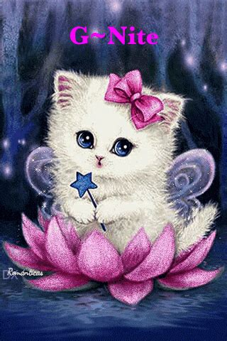 White Cat & Sitting On A Flower Night Quotes Pictures ...