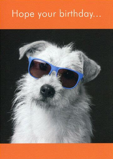 White Dog with Sunglasses Funny Birthday Card   Greeting ...