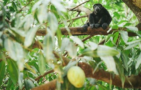 Who Else Enjoys Mangos? Learn about animals that eat mango