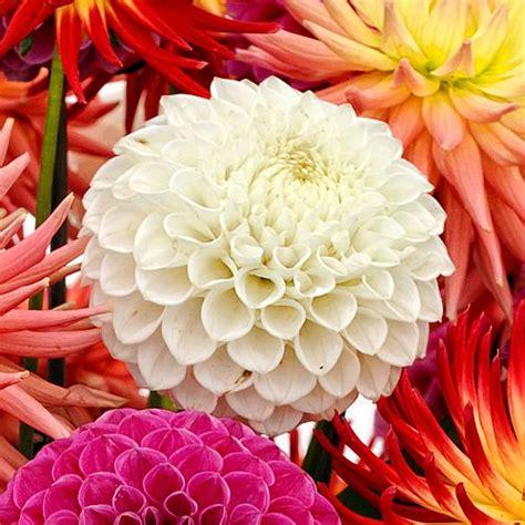 Wholesale Flowers   Bulk Wedding Flowers Online ...