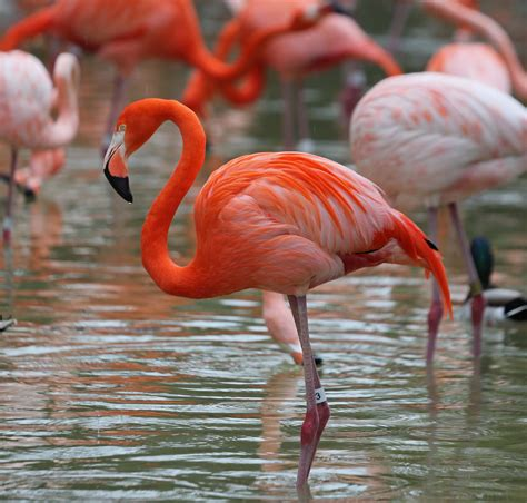 Why are birds like Flamingos pink?   Quora