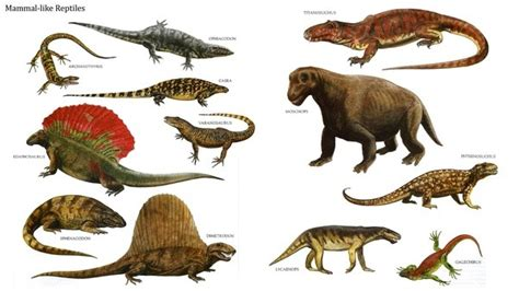 Why did reptiles evolve before mammals?   Quora