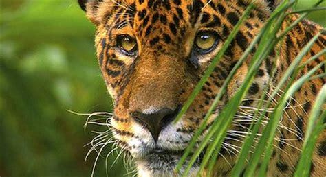 Wild Amazon, Monday, June 27