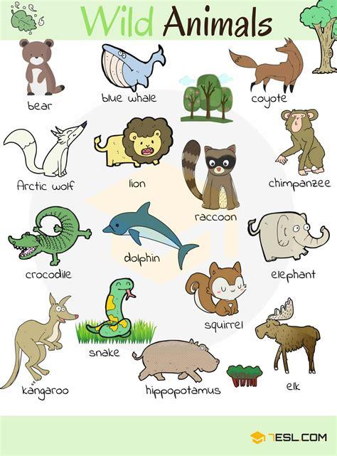 Wild Animal Vocabulary in English   ESLBuzz Learning English