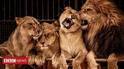 Wild animals in travelling circuses banned in Scotland ...