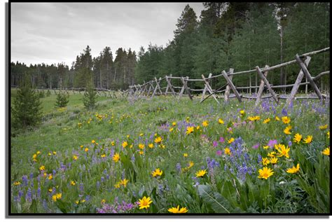 wild flowers   Bing Images   Mountains, Fun facts