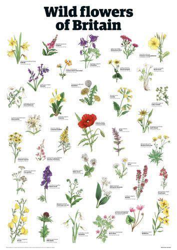Wild flowers of Britain   Guardian Wallchart Prints ...
