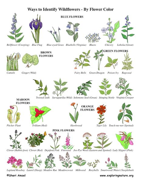 Wildflower Identification by Color