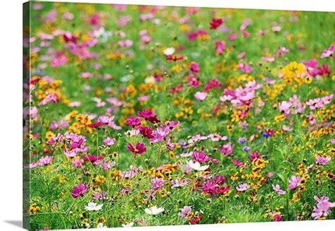 Wildflowers in meadow | Wildflower seeds, Plants, Wild flowers