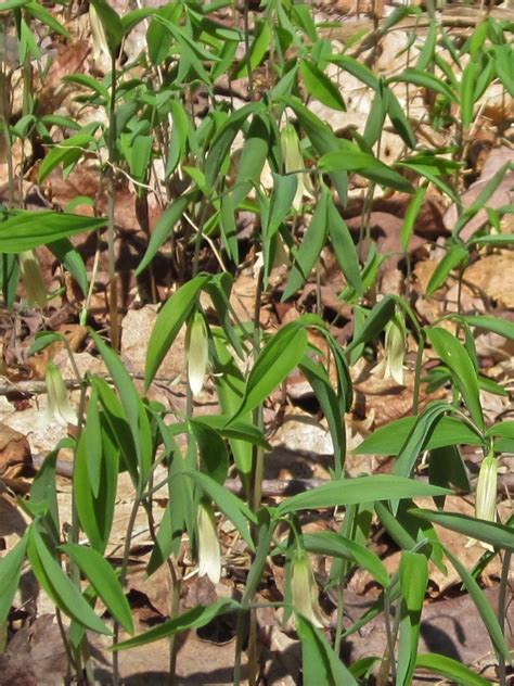 Wildflowers of the Catskills