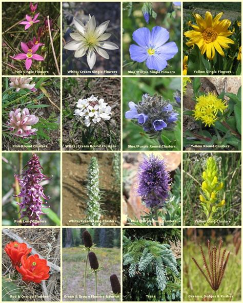Wildflowers of the Southern Rocky Mountains : A guide to ...
