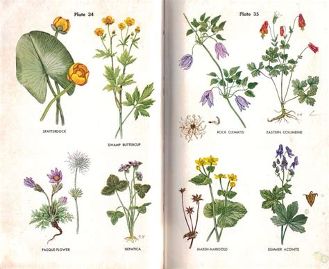 wildflowers with names   Google Search | Stationery ...