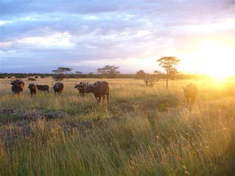 Wildlife of Kenya   Wikipedia