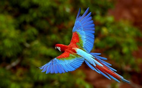 Wildlife of the World: Beautiful Parrot Wallpapers 2012