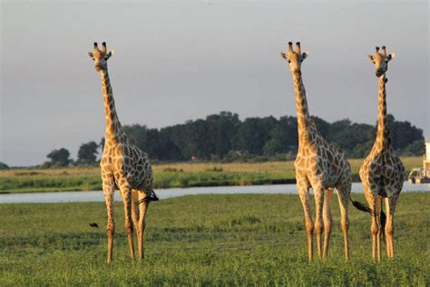 Wildlife Parks and Zoos in France : The Good Life France