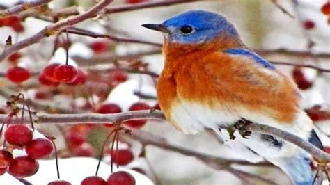 WINTER BIRDS   YouTube