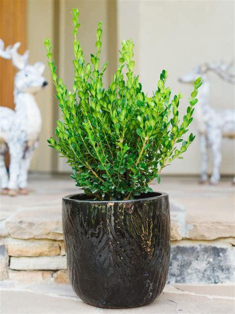 Winter Friendly Patio Plants | HGTV