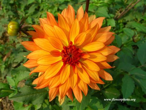 Winterizing your plants: How to transition outdoor plants ...