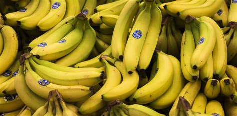 With the familiar Cavendish banana in danger, can science ...