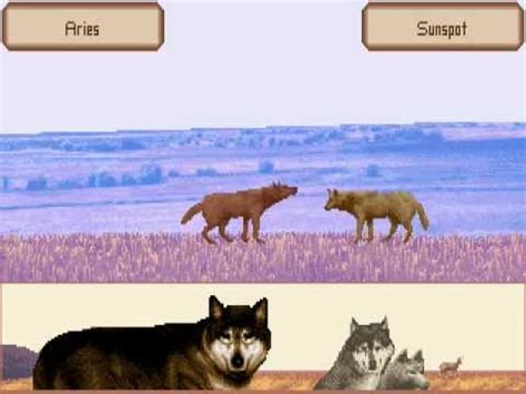 WOLF gameplay: Mating   YouTube