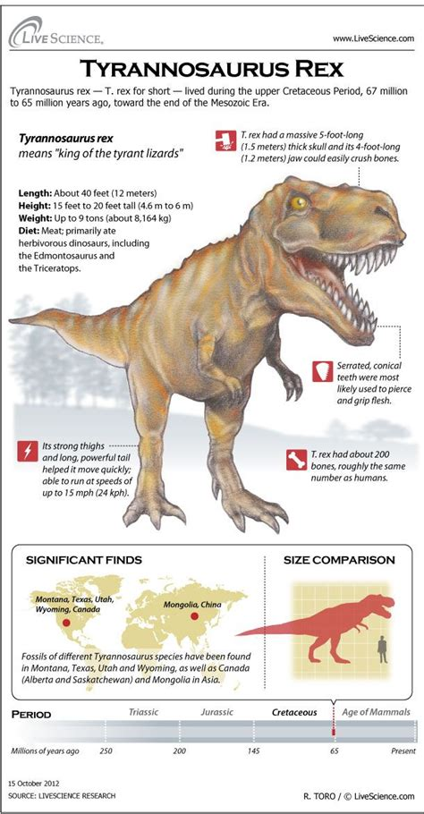 working on my paper! Learn about T. rex s massive teeth ...