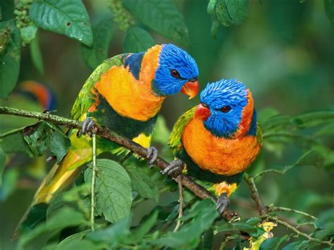 World Animal Pictures: Cute Birds Wallpaper