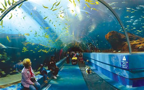 World Visits: Georgia Aquarium in United States