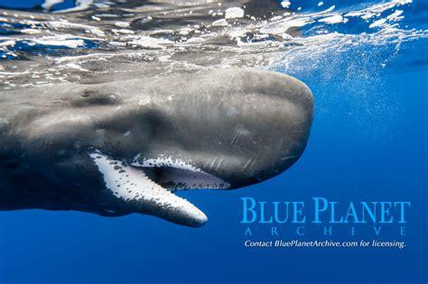 World's best underwater & wildlife stock photos | Blue ...
