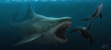 Would the one of the largest Megalodon be able to take ...